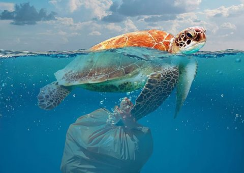 Plastic Pollution Bottles